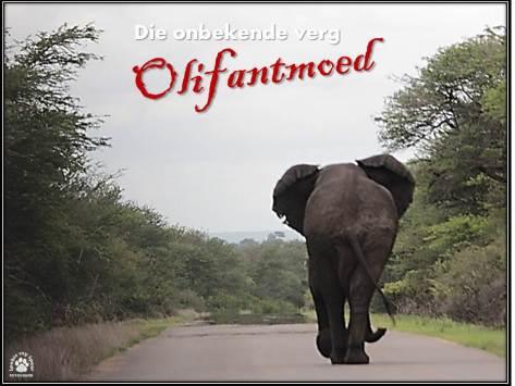 Seker voetstappe van 'n olifantbul 2015